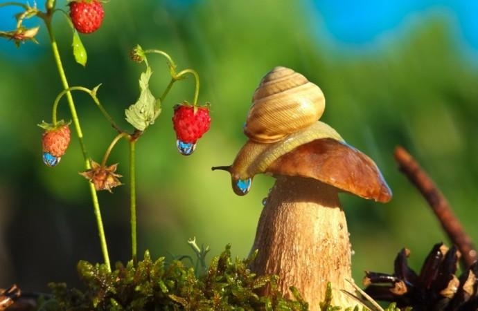【神奇蜗牛照片】!看过这些华丽影像后,你对蜗牛的印象将彻底改变~